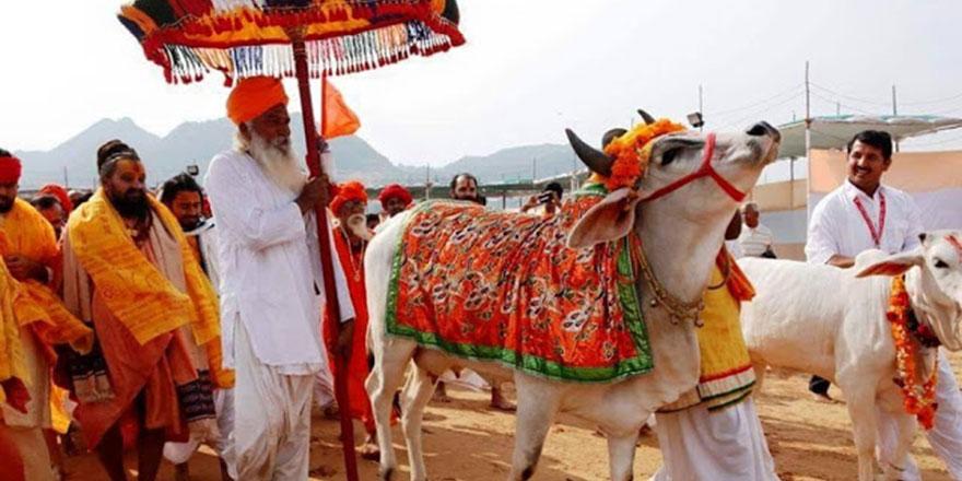 Hindistan'da ineğin Tanrılığı bahane maksat Müslümanları linç etmek