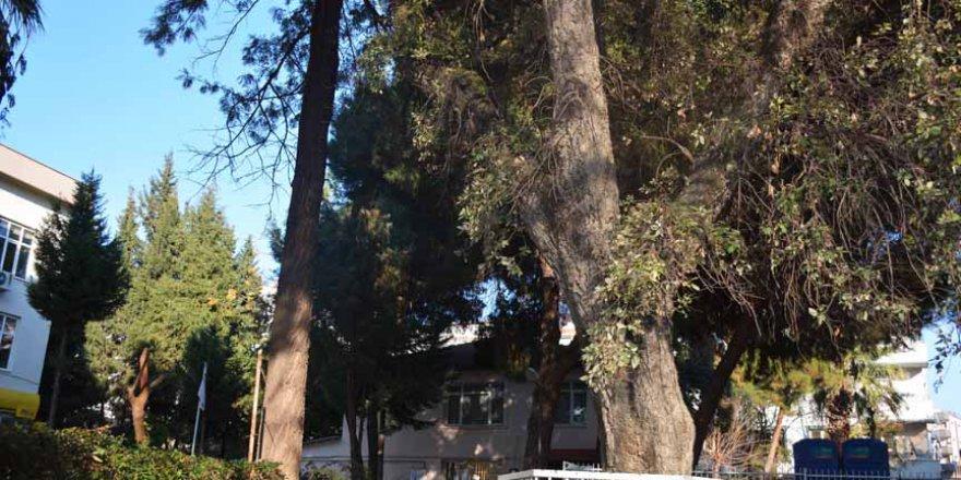 Sultan 2. Abdülhamid'e hediye edilen ağaç projeyi değiştirdi