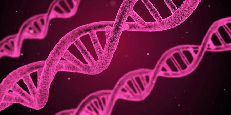 Yediklerimizin DNA'ya 'net' etkileri tespit edildi