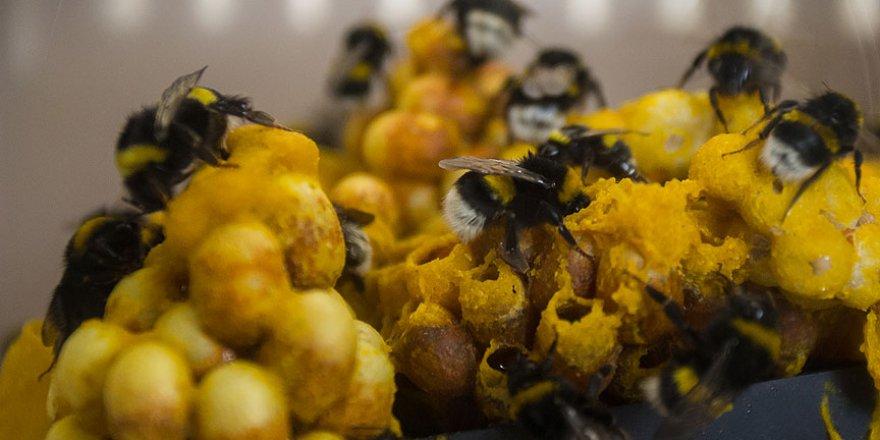Dirençli bakteriklere karşı çare eşek arısında