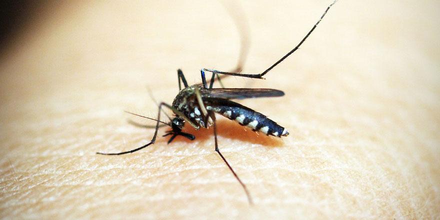 Rusya'nın kentini mayıs sineği istila etti