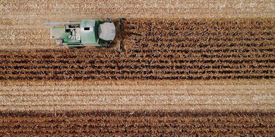 Çukurova çiftçisinin yüzünü mısır fiyatları güldürdü