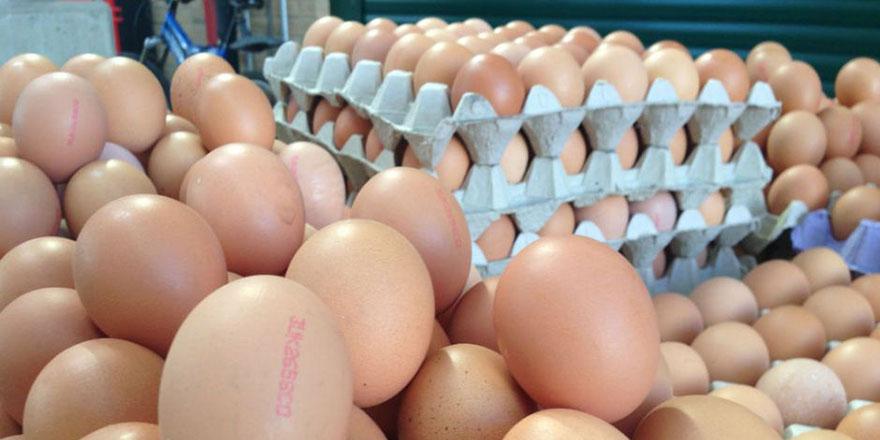 Üreticiler yeni yumurta uygulamasından memnun