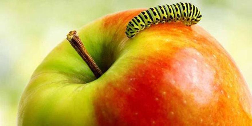 Sağlık için kurtlu elma, kurtlu meyve yiyin