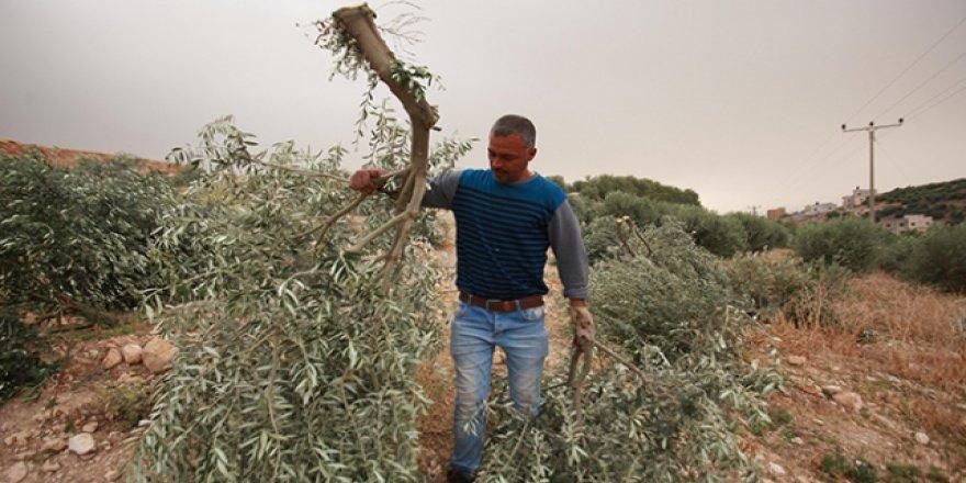 İşgalci İsrail gözünü Filistinlilerin tarım arazilerine dikti
