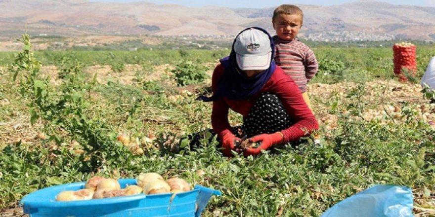 Mevsimlik tarım işçilerinin zorlu yolculuğu başladı