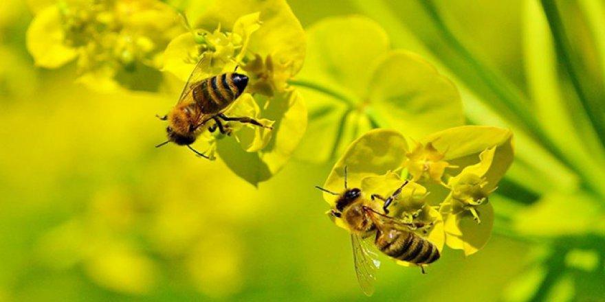 Avrupa Birliği'nden arılara zarar veren maddelere yasak