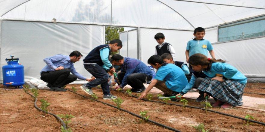 Öğrenciler tarım ve hayvancılıkla iç içe eğitim görüyor