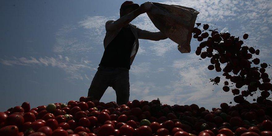 Tarım işçilerinin mevsimlik göçü başladı