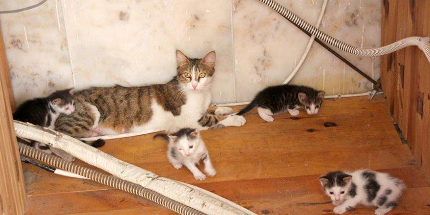 Camide yuva yapan kedi ve yavruları barınağa kavuştu