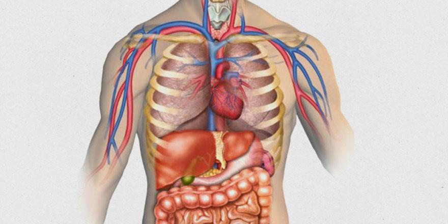 Oruçla organlar dinleniyor vücut gençleşiyor