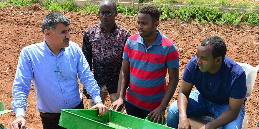 Somali'ye tarımı Türkiye öğretiyor