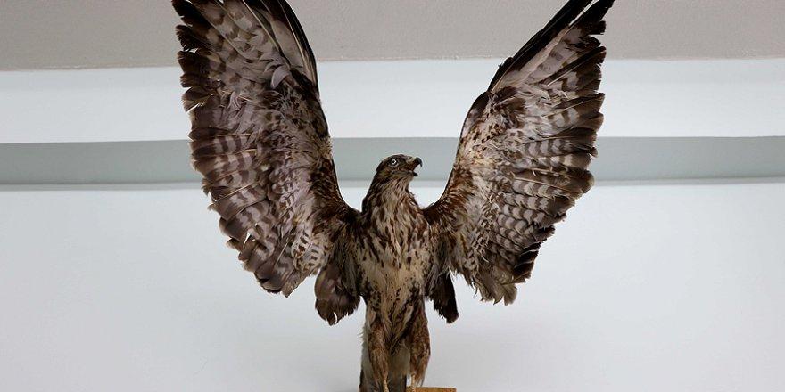 Türkiye'nin biyolojik çeşitliliği bu müzede