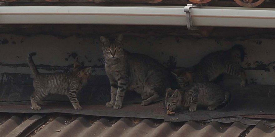 'Sıfır Atık' projesi kedi ve köpeklere yaradı