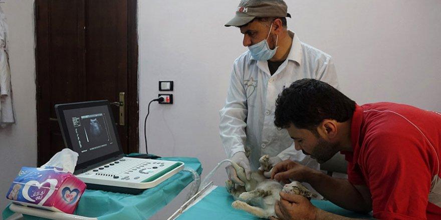 Halepli hayvansever kedilere sahip çıktı
