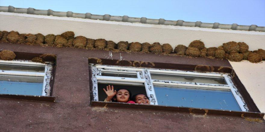 Muş'ta okula yuva kuran kırlangıçlar ilgi odağı oldu