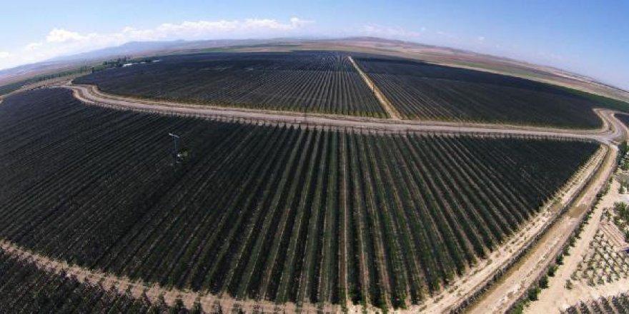 Niğde'deki dev bahçeden yılda 20 bin ton elma toplanıyor