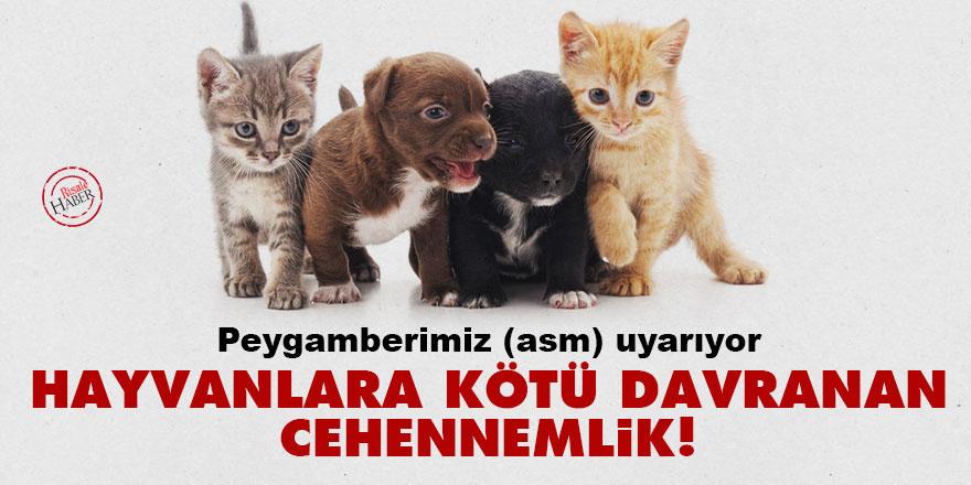 Peygamberimiz (asm) uyarıyor: Hayvanlara kötü davranan cehennemlik!