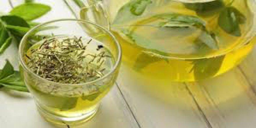 Trabzon'un organik yeşil çayı dünyada meşhur oldu