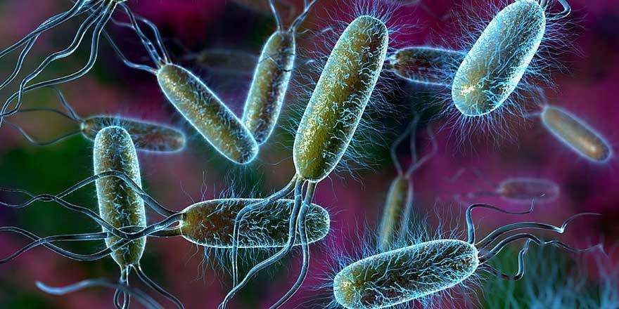 Daha önce rastlanmayan bir bakteri türü tespit edildi