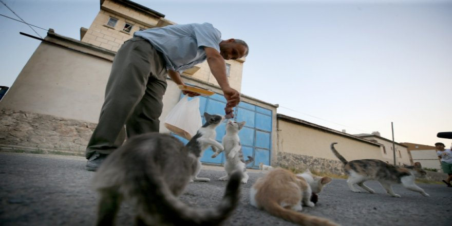 Muhtar 5 yıldır sokak kedilerini besliyor