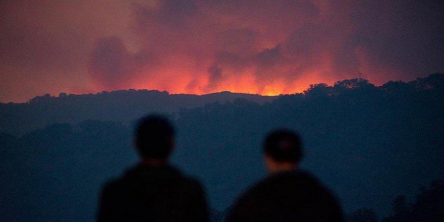 ABD'nin başı orman yangınları ile dertte