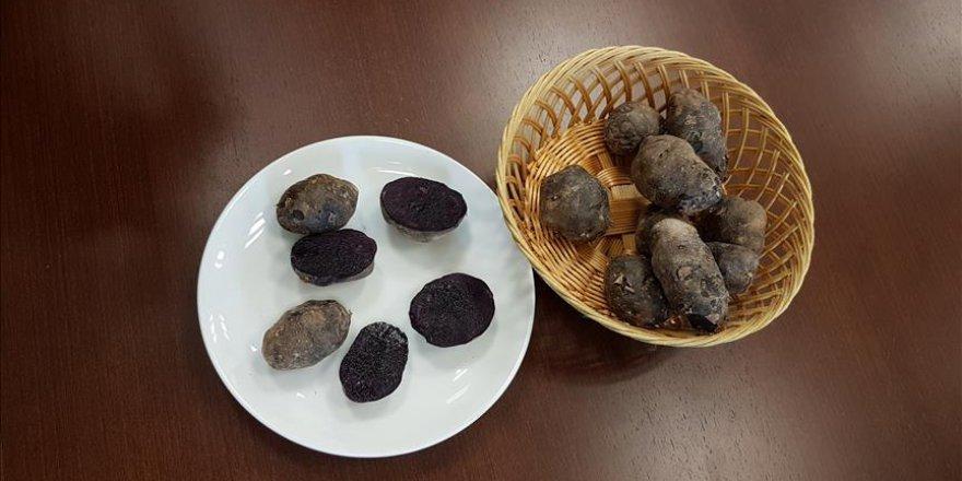 Ömer Halisdemir Üniversitesi'nden yeni buluş: Mor Patates
