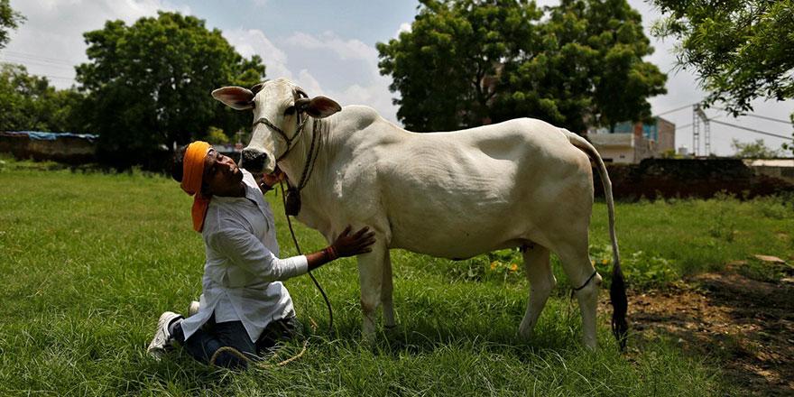 Bu rezalete son verilmeli: Hindular, inek yüzünden bir Müslüman daha öldürdü