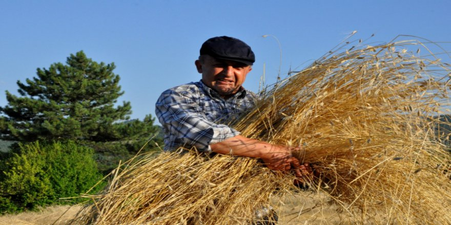Bereketli topraklarda 'buğday' mesaisi