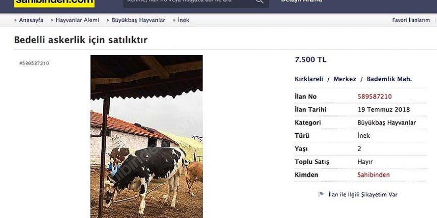Bedelli askerlik için satılık inek