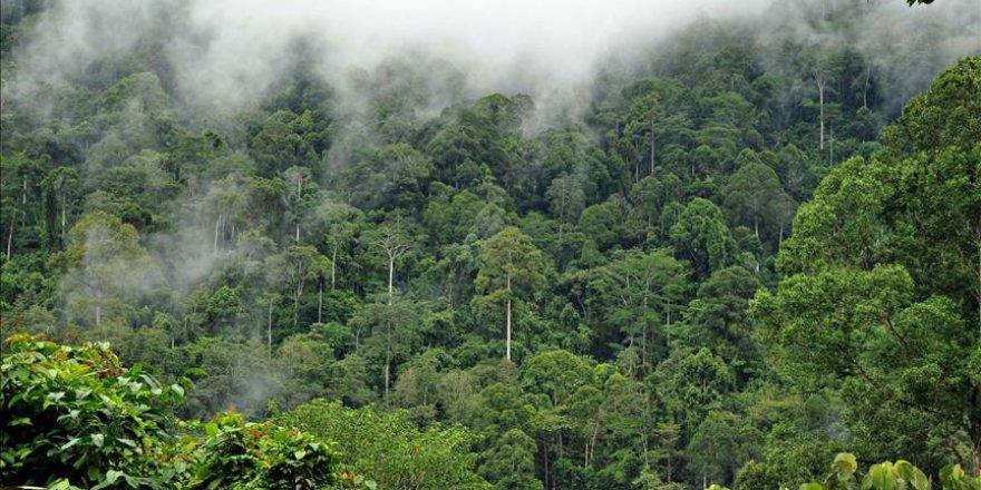 Amazon ormanları artık havayı temizleyemiyor