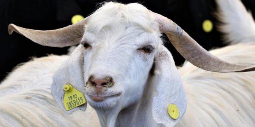 Uzmanlar uyarıyor: Kurban Bayramı'nda et tüketimine dikkat