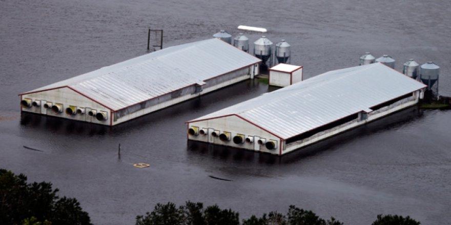 ABD'nin tavukçuluk sektörüne kasırga şoku