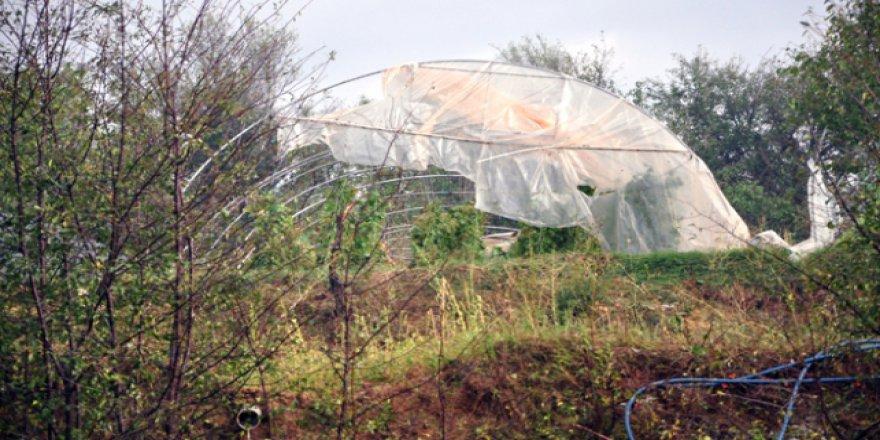 Kastamonu'daki sağanak ve dolu meyve ağaçlarına büyük zarar verdi