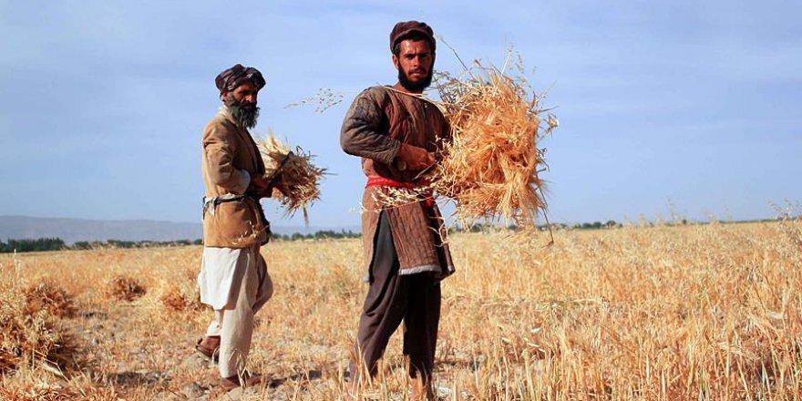 Dünyadaki 39 ülke resmen açlık çekiyor