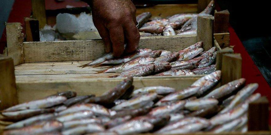 'Hamsi avı için 1,5 ay daha beklenmeli'