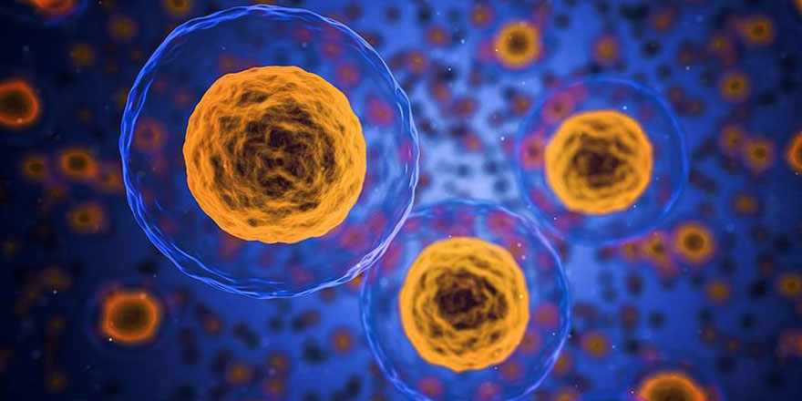 Bilim adamları: Akılalmaz derecede şaşırtıcı yeni bir insan hücresi yapısı keşfettik