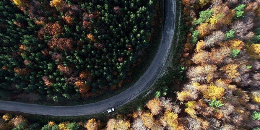 Kunduz Ormanları'nda tefekkürlük manzaralar
