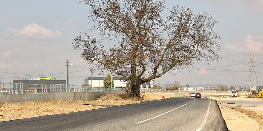 Güzel haber: 270 yıllık çınar ağacı için yol güzergahı değişti