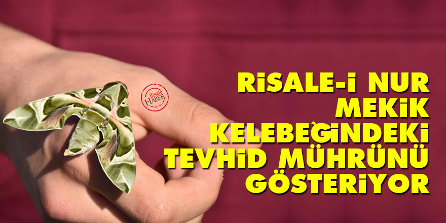 Risale-i Nur mekik kelebeğindeki Tevhid mührünü gösteriyor