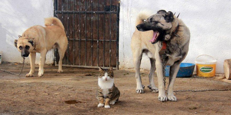 Kangallar ve Kediler arasında sıra dışı dostluk