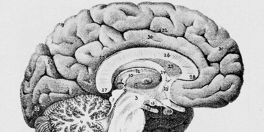 Kafein hafızayı güçlendirebilir