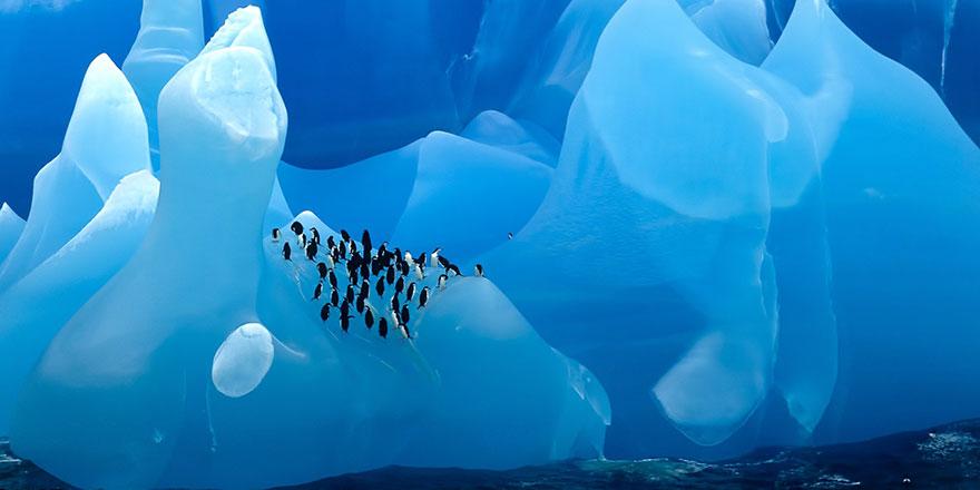Antarktika'nın altı ölü kıta mezarlığı çıktı
