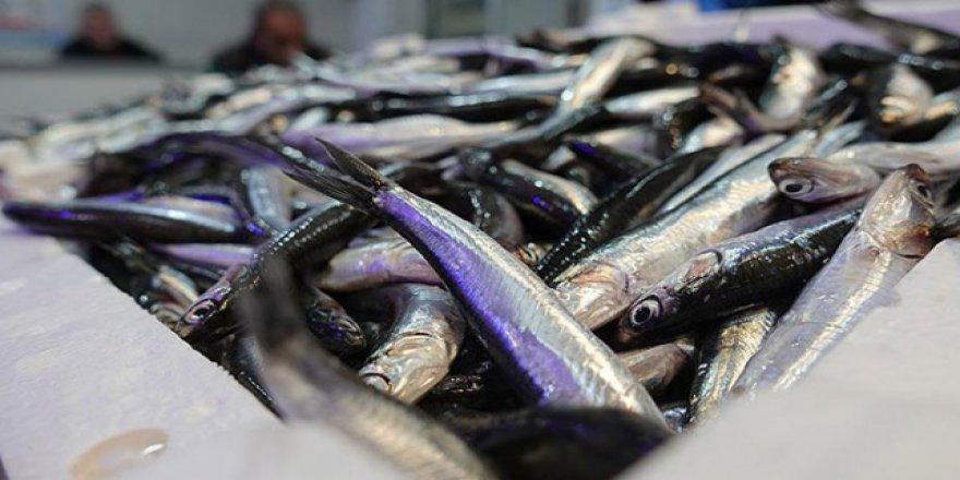Balıkçıların yüzü hamsi ile gülüyor
