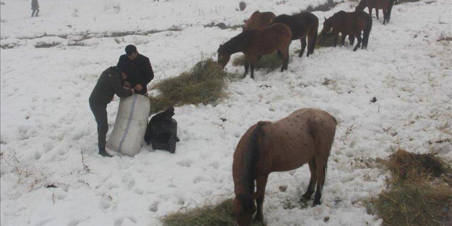 Kar yağışından sonra beslenemeyen atlara belediye sahip çıktı