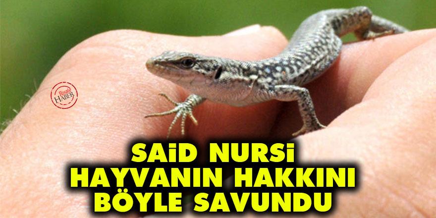 Said Nursi, hayvanın hakkını böyle savundu