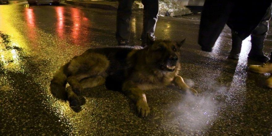 Yaralı köpek için montunu sedyeye serdi