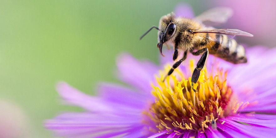 Tarım Bakanlığı'ndan 'çok acil' yazısı: Arılar kurtuluyor