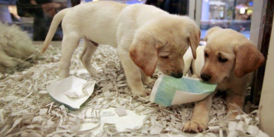 İngiltere'de yavru kedi ve köpeklerin mağazada satışı yasaklandı