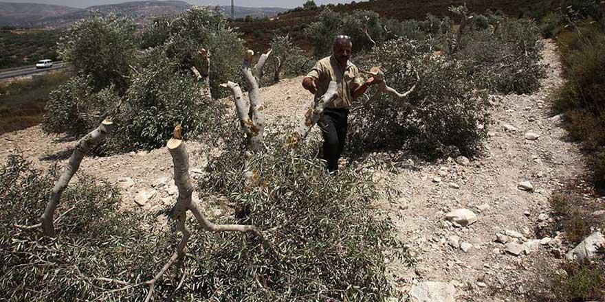 İşgalci Yahudiler Filistinli çiftçinin zeytin fidanlarını söktü